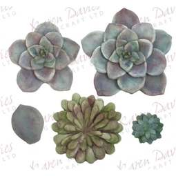 View the Succulent silicone icing mould set online at Cake Stuff