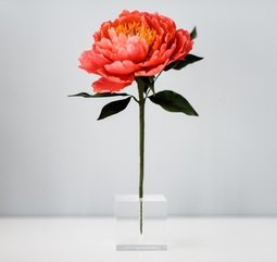 View the single hole acrylic floral display cube holder  online at Cake Stuff